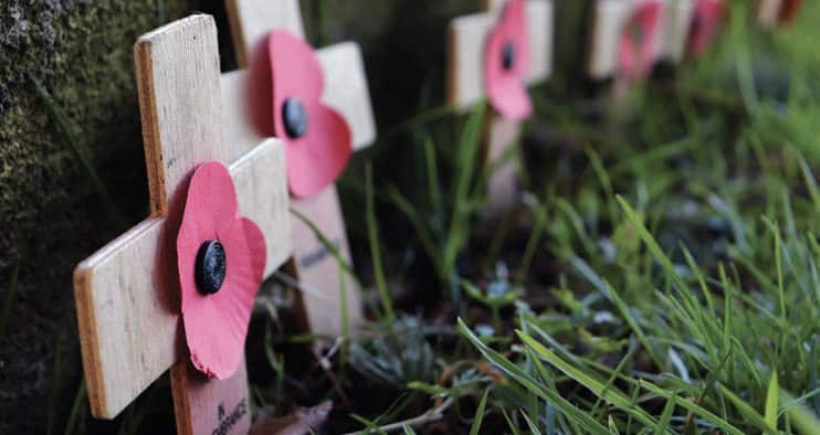 Poppies on a grave