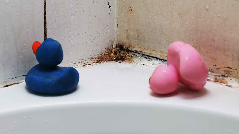 Rubber bath ducks in an old mouldy bath