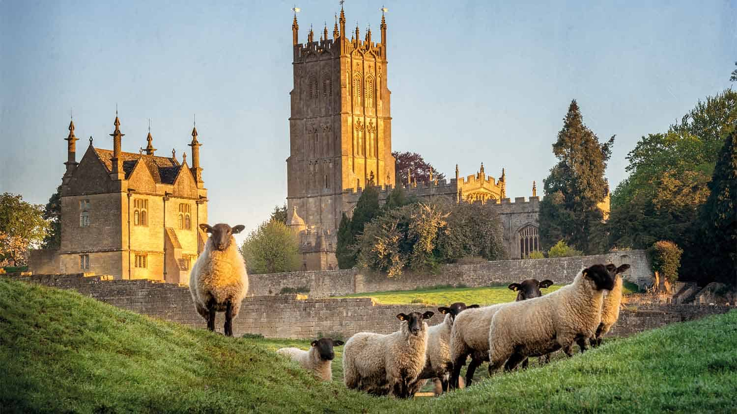 Church with sheep roaming in a field in the foreground